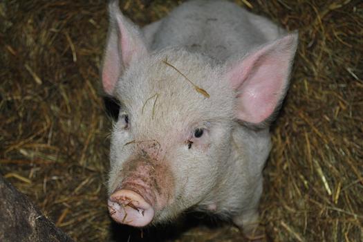 b7d0b258633 Zvířata jsou živé bytosti a zaslouží si prožít hodnotný život bez  zbytečného utrpení. Na tom se – v různé míře – lidé shodnou. Jenže ve  skutečnosti je celá ...